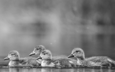 GET YOUR DUCKS IN A ROW. THE STAGES OF SELLING YOUR HOME.